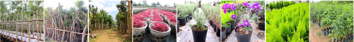 Cửa hàng cây hoa cảnh online ILG ( I Love Gardening )