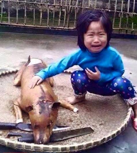 Bức ảnh bé gái òa khóc bên chú chó bị giết thịt