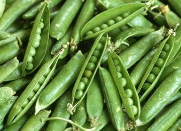 Kỹ thuật trồng cây đậu xanh đạt năng suất cao