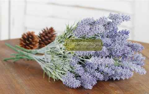 hoa-lavender-tuyet-than-co