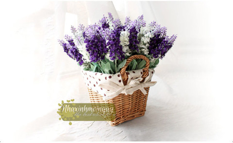 gio-may-hoa-lavender